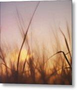 Grass In A Windy Field Metal Print