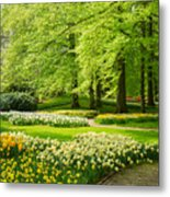 Grass Lawn With Daffodils  Metal Print