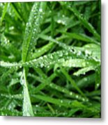 Grass Plus Water Metal Print