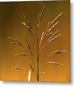 Grass During Sun Set Metal Print