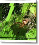 Grass Spider Metal Print