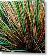 Grass Tussock Metal Print