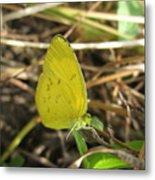 Grass Yellow 01 Metal Print