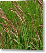 Grass3 Metal Print