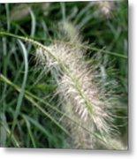 Grasses 6 Metal Print