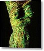 Grasses Metal Print by Arla Patch