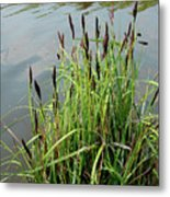 Grasses With Seed Heads Metal Print