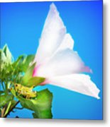 Grasshopper And Blue Sky Metal Print