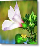 Grasshopper And Flower Metal Print