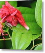 Grasshopper And Hibiscus Metal Print
