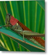 Grasshopper On Palm Leaf Metal Print