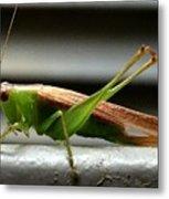Grasshopper Posing Metal Print