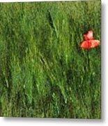 Grassland And Red Poppy Flower 2 Metal Print