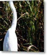 Grassy Egret Metal Print