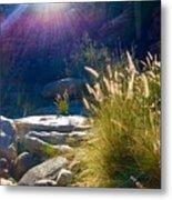 Grassy Sun Rays Metal Print