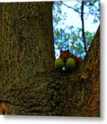 Grateful Tree Squirrel Metal Print