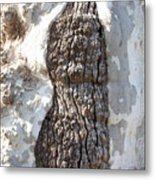Gray Bark Abstract Metal Print