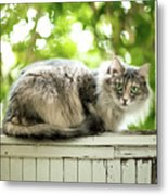 Gray Cat Sitting On A Balcony Metal Print