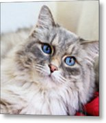 Gray Cat With Green Eyes Metal Print