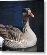Gray Duck Metal Print