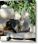 Gray Fox 4 Metal Print