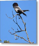 Gray Hawk Retreat Metal Print