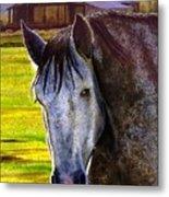 Gray Horse Metal Print