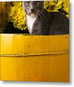 Gray Kitten In Yellow Bucket Metal Print