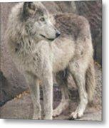 Gray Wolf Profile Metal Print