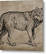 Gray Wolf Timber Wolf Western Wolf Woods Texture Metal Print