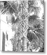 Grayscale Palm Trees Pen And Ink Metal Print