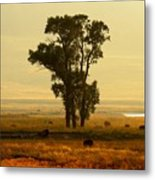 Grazing Around The Tree Metal Print