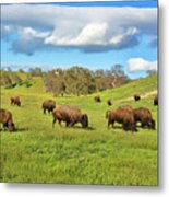 Grazing Buffalo Metal Print