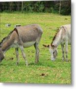 Grazing Donkeys Metal Print