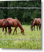 Grazing Horses - Cades Cove - Great Smoky Mountains Tennessee Metal Print