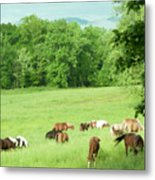 Grazing In The Morning Metal Print
