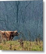 Grazing In Winter Metal Print