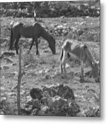 Grazing Metal Print by Michael Peychich