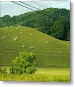 Grazing On The Mountain Side Metal Print