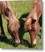 Grazing Together Metal Print