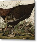 Great American Hen And Young Metal Print by John James Audubon