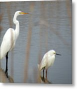 Great And Snowy Egret Metal Print