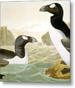 Great Auk (alka Impennis): Metal Print