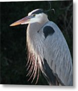 Great Blue At Rest Metal Print