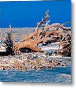 Great Blue Driftwood Metal Print