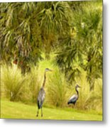 Great Blue Golfing Metal Print