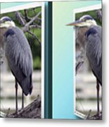 Great Blue Heron - Gently Cross Your Eyes And Focus On The Middle Image Metal Print