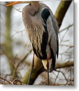 Great Blue Heron 1 Metal Print