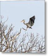 Great Blue Heron 2014-4 Metal Print
