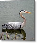 Great Blue Heron 4 Metal Print